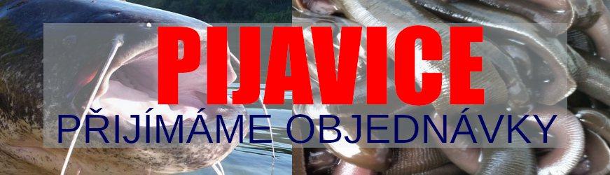 Živé nástražní rybky na prodejně U Sumce