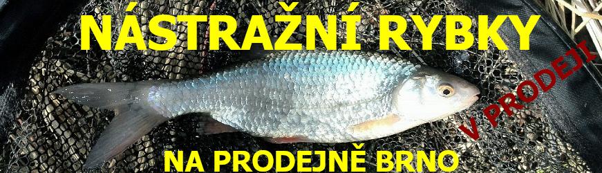rybky na prodejně