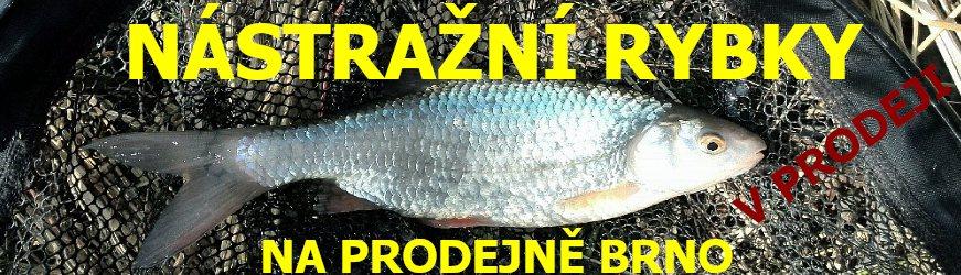 Vše pro zimní rybolov skladem U Sumce